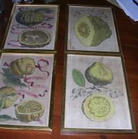 Fruit_Prints.DSCN0324